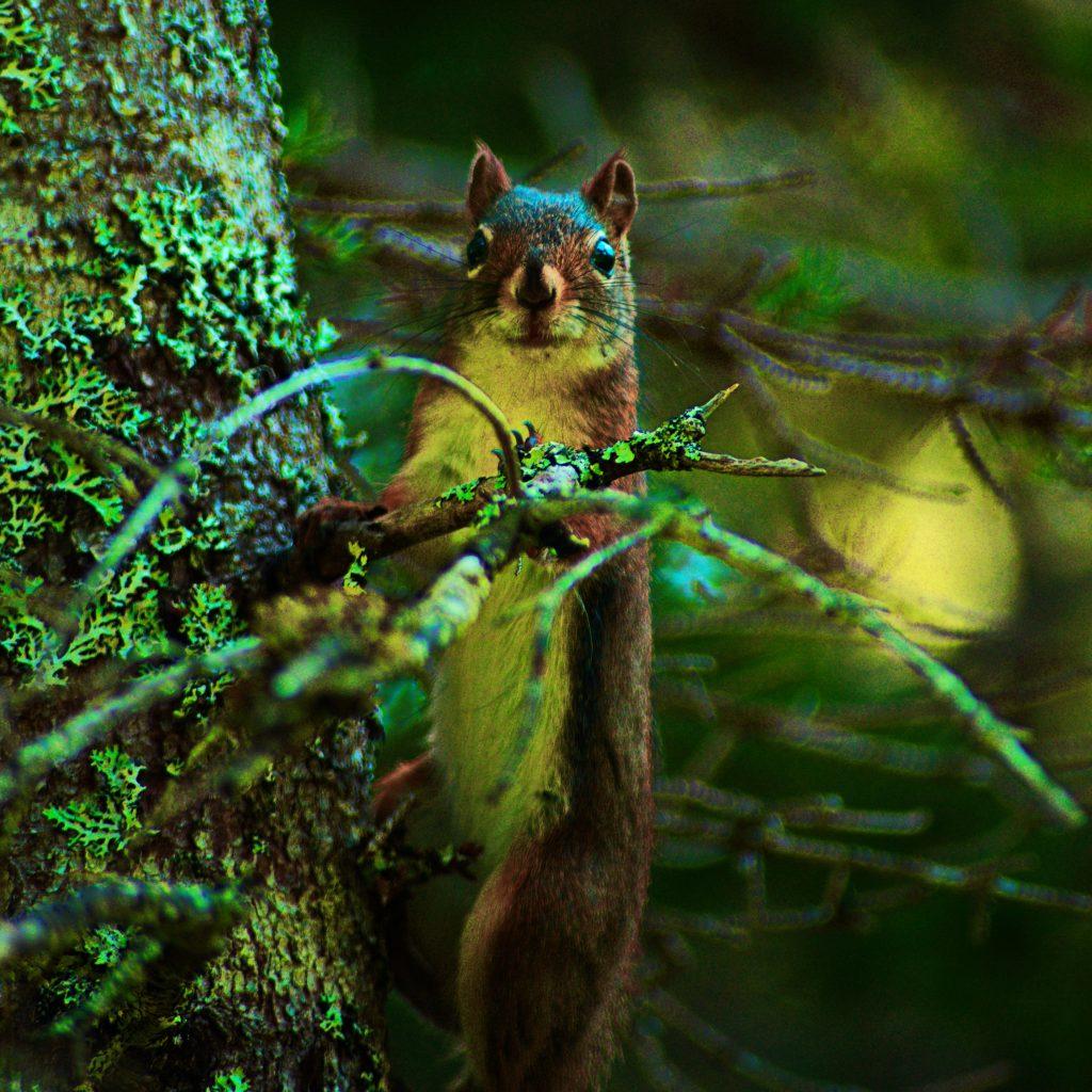 Stalking Squirrel